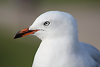 Marylène COTEL-mouette_a_port_cambe