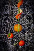 Annie Cherpin - 3 fruits pendus